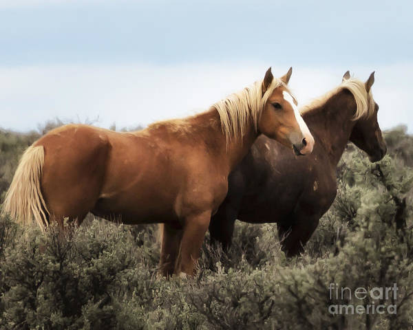 Photograph - Palomino - Buttes - Wild Horses by Belinda Greb