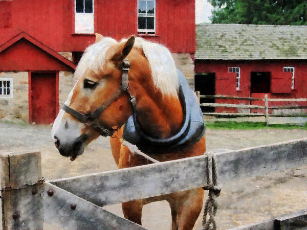 Photograph - Palomino By Red Barn by Susan Savad