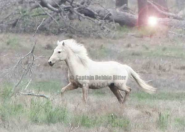 Photograph - Palomino Dream by Captain Debbie Ritter