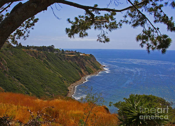 Photograph - Palos Verdes By Diana Sainz by Diana Raquel Sainz