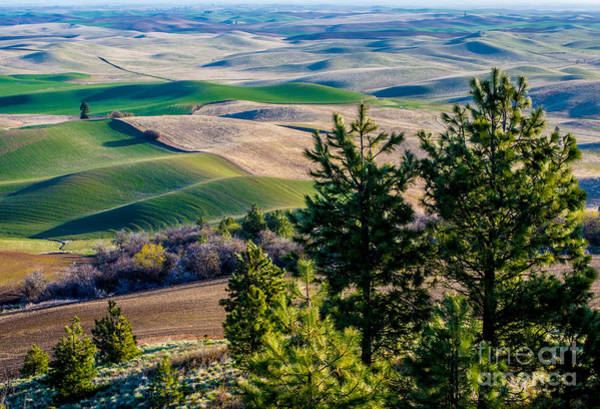 Prarie Photograph - Palouse Country - Eastern Washington by Gary Whitton