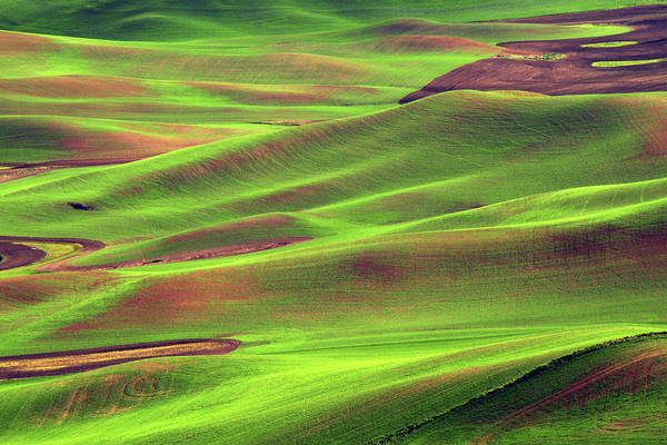 Brown County State Park Photograph - Palouse From Steptoe Butte by Michel Hersen
