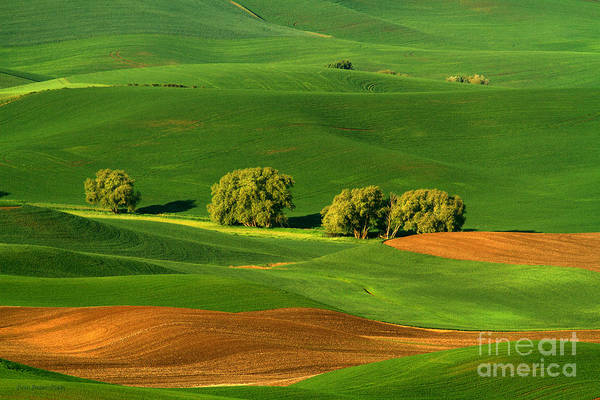Photograph - Palouse Green by Beve Brown-Clark Photography