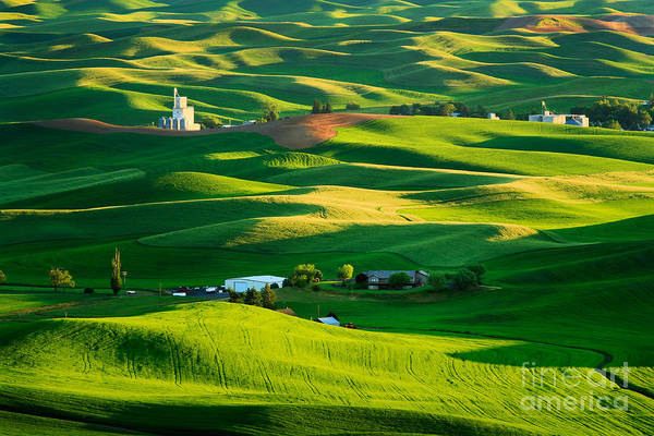 Western Pacific Photograph - Palouse Green Sea by Inge Johnsson