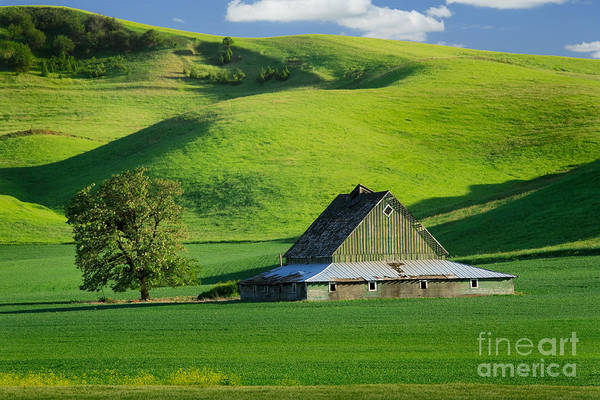 Western Pacific Photograph - Palouse Grey Barn by Inge Johnsson
