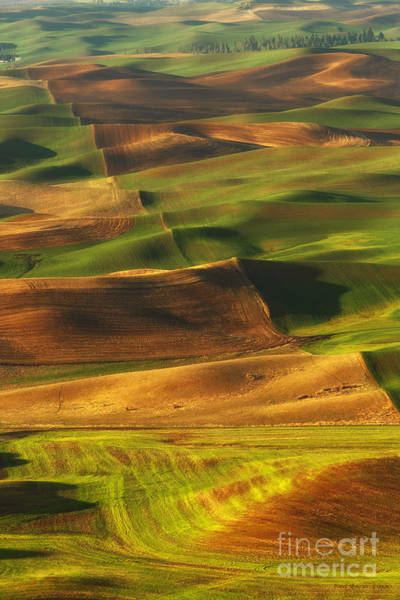 Palouse Morning Art Print