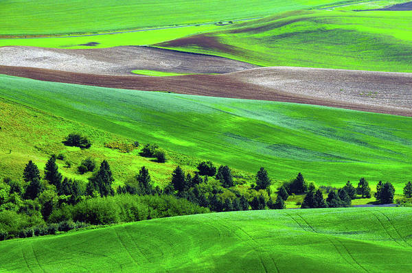 Brown County State Park Photograph - Palouse, Steptoe Butte, Cultivation by Michel Hersen