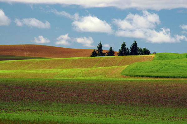 Brown County State Park Photograph - Palouse View, Whitman County, Washington by Michel Hersen