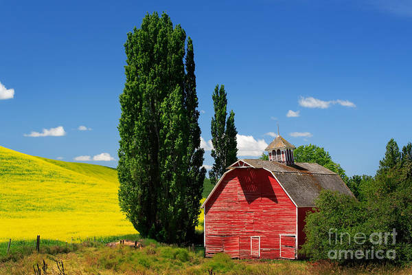 Western Pacific Photograph - Palouse Weathered Barn by Inge Johnsson