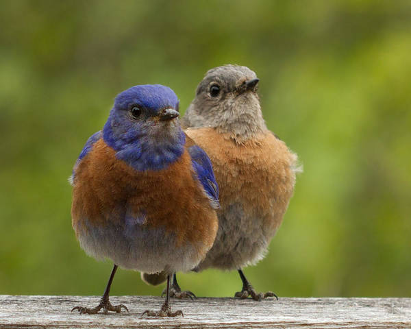 Bird Feed Photograph - Pals by Jean Noren