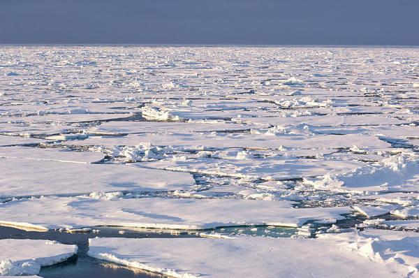 Conserved Photograph - Pancake Ice, Greenland Sea, East Coast by Daisy Gilardini
