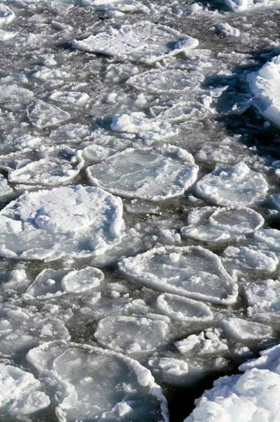 Ice Floe Photograph - Pancake Ice by Steve Allen/science Photo Library