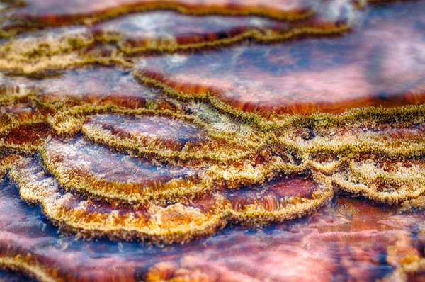 Photograph - Pancakes Hot Springs by Scott Campbell