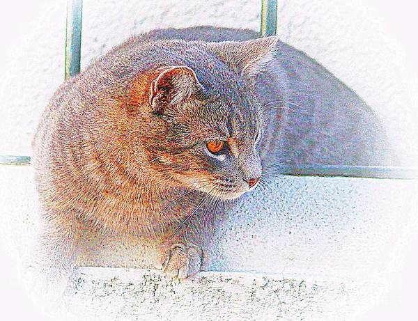 Pancho On The Roof Terrace Art Print