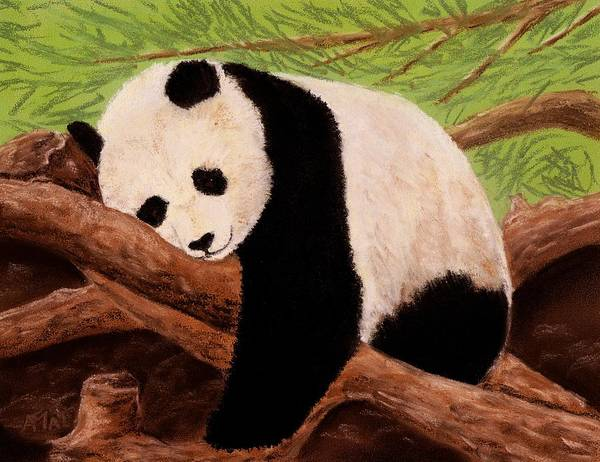Hibernation Wall Art - Painting - Panda by Anastasiya Malakhova