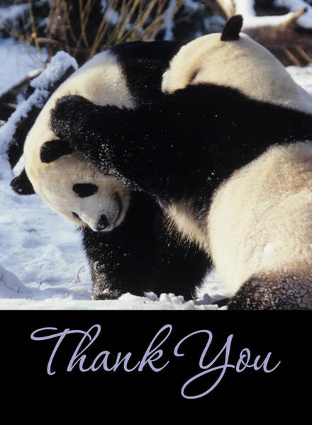 Photograph - Panda Thank You Cards by Chris Scroggins
