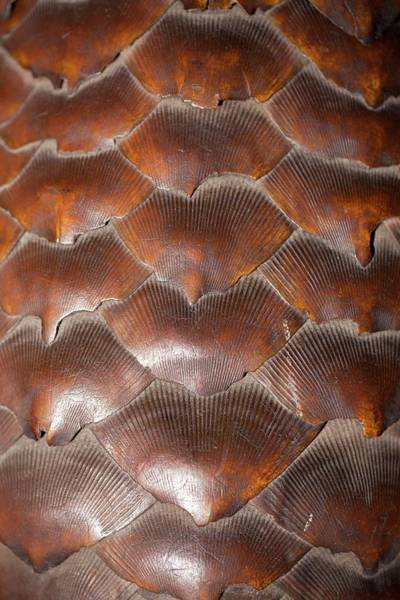 Traditional Chinese Medicine Wall Art - Photograph - Pangolin Scales by Paul D Stewart