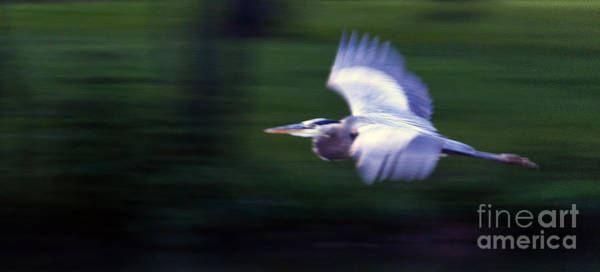 Coosa River Photograph - Panned Heron  #9652 by J L Woody Wooden