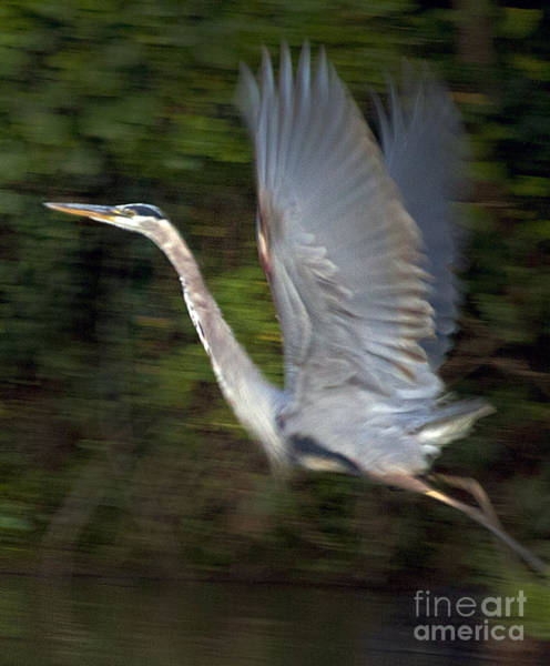 Coosa River Photograph - Panned Heron  #9724 by J L Woody Wooden