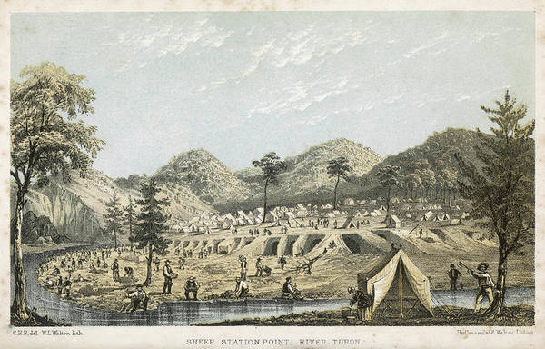 New South Wales Drawing - Panning For Gold At Sheep Station by Mary Evans Picture Library