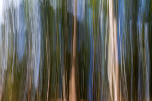 Wall Art - Photograph - Panning Forest 3 by Stelios Kleanthous