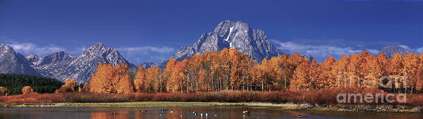 Photograph - Panorama Fall Colored Aspens Oxbow Bend Grand Tetons National Park by Dave Welling