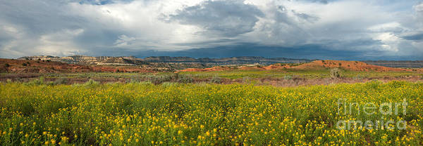 Photograph - Panorama Striaght Cliffs And Rabbitbrush Escalante Grand Staircase  by Dave Welling