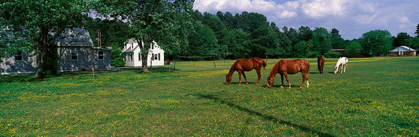 Abode Photograph - Panoramic View Of Horses Grazing by Panoramic Images