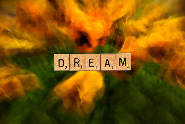 Photograph - Pansies-dream by  Onyonet  Photo Studios