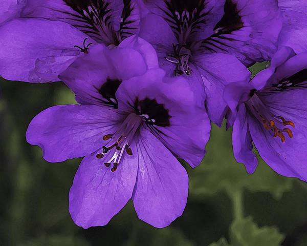 Photograph - Pansies In Purple by Wayne Wood
