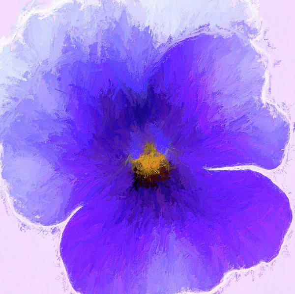 Wall Art - Painting - Pansy Purple by Cora Niele