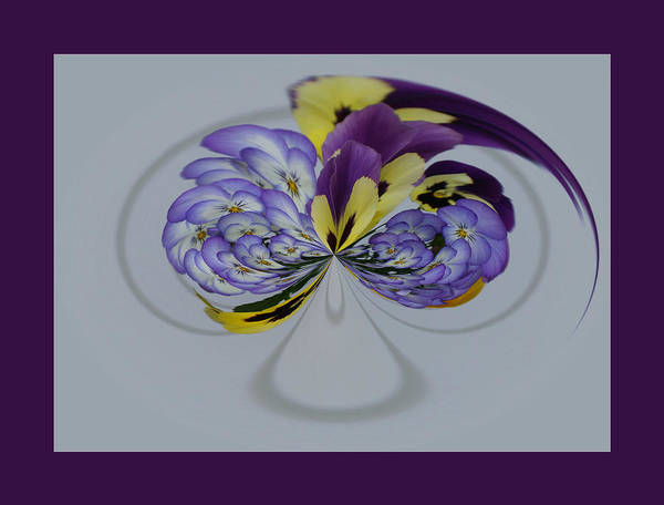 Photograph - Pansy Series 504 by Jim Baker