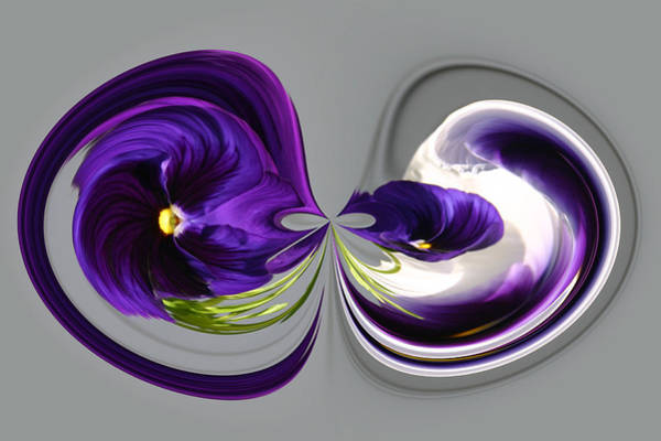 Photograph - Pansy Series 802 by Jim Baker