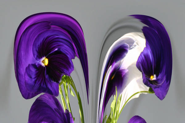 Photograph - Pansy Series 803 by Jim Baker