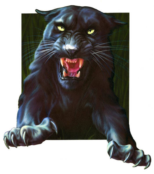 Andrew Farley Photograph - Panther Attack by MGL Meiklejohn Graphics Licensing