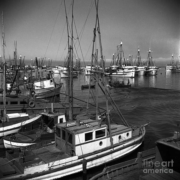 Photograph - Paolina T. Fishing Boats Monterey Harbor Circa 1945 by California Views Archives Mr Pat Hathaway Archives