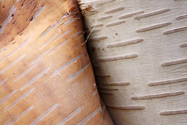 Photograph - Paper Birch Bark by Scott Leslie