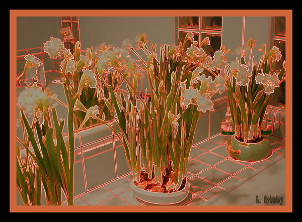 Wall Art - Photograph - Paper Whites by Lessandra Grimley