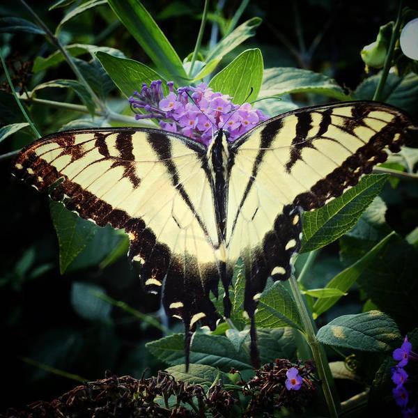 Photograph - Papillon by Natasha Marco