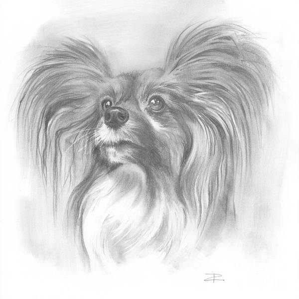 Mutt Drawing - Papillon by Paul Davenport