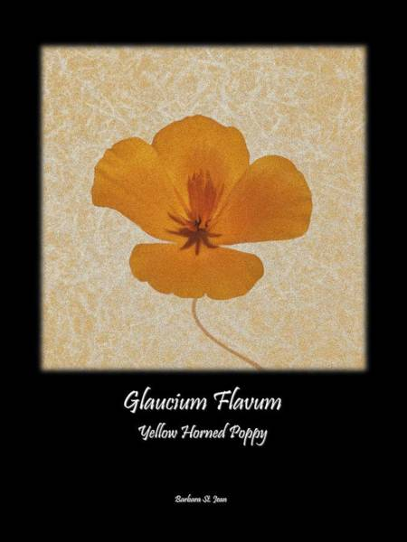 Digital Art - Papveraceae Poppy Poster 2 by Barbara St Jean