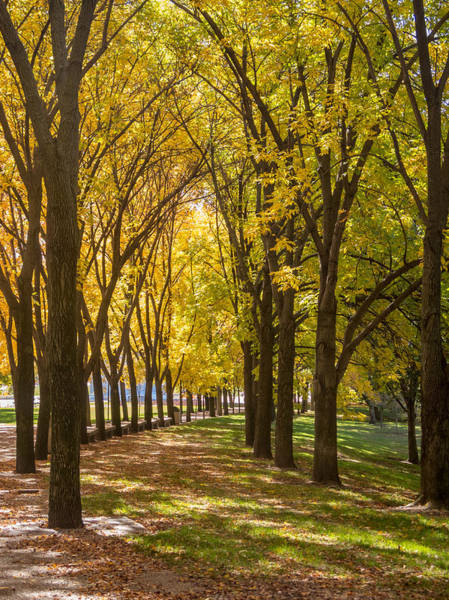 Photograph - Parade Of Trees by David Coblitz