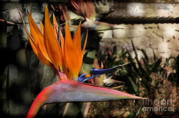 Wall Art - Photograph - Paradise Found by Mary Machare