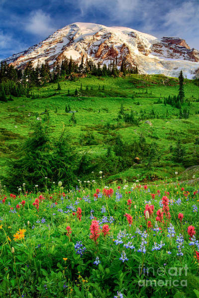 Mount Rainier Photograph - Paradise by Inge Johnsson