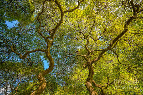 Mv Photograph - Parallel Branches by Michael Ver Sprill