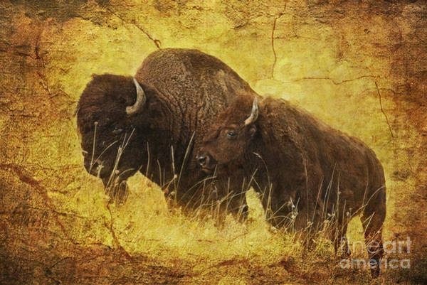 Prairie Home Digital Art - Parent And Child - American Bison by Lianne Schneider