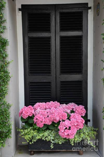 Wall Art - Photograph - Paris Pink Hydrangeas Window Box - Paris Hydrangeas Window Box Art by Kathy Fornal