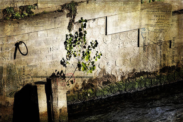 Photograph - Paris Shadow Of The Seine by Evie Carrier