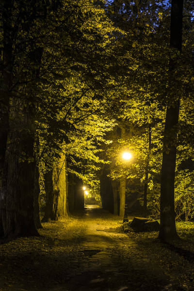 Light Photograph - park Alley by Jaroslaw Grudzinski