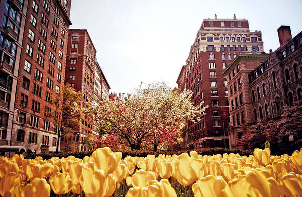 East Side Photograph - Park Avenue In The Spring  by Vivienne Gucwa